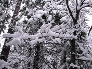 snow_covered_trees